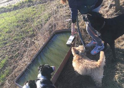 Sortie groupée   Pension pour chien